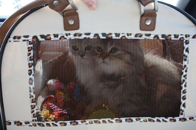 Scooter and Honey in carrier.jpg